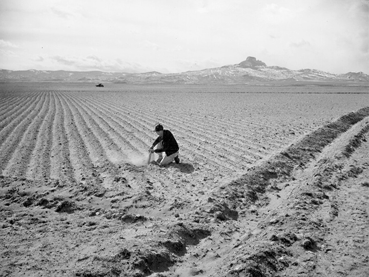Land cleared of sagebrush last fall and corrugated against wind erosion. Assistant Farm Superintendent, Eiichi Sakauye, checking the moisture for early Spring crop planting. Photographer: Iwasaki, Hikaru--Heart Mountain, Wyoming. 3/10/44